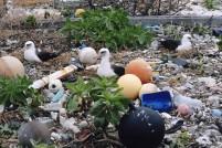 Marine Trash and Plastic Debris